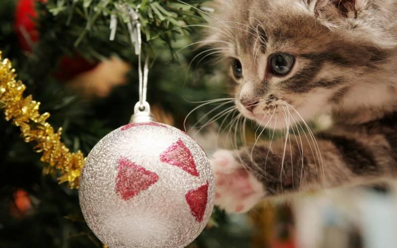 Елочный шар и котенок. Новогодние обои на рабочий стол