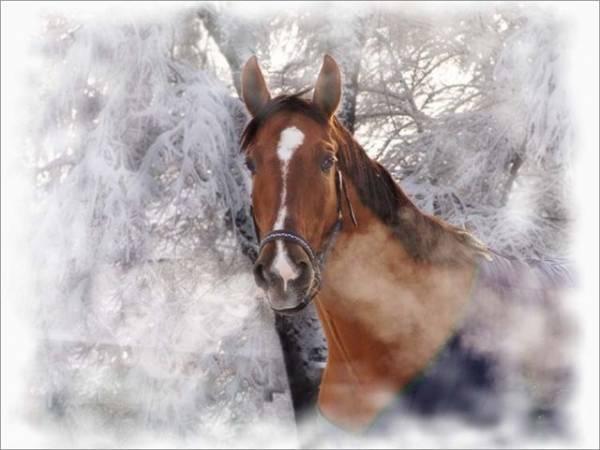 Символ 2014 года - лошадь. С Новым Годом лошади