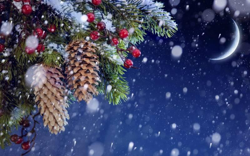 Еловые шишки и ягоды. Картинки зима