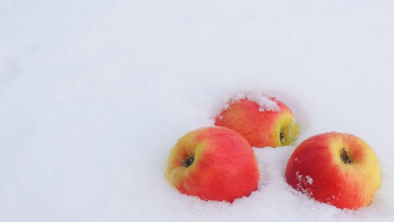 Яблоки на снегу. Картинки зима