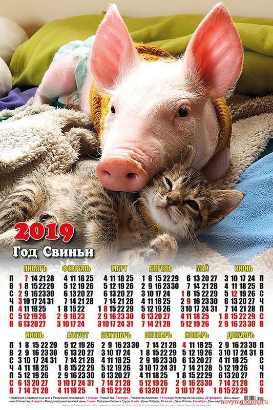 Календарь 2019 с поросёнком