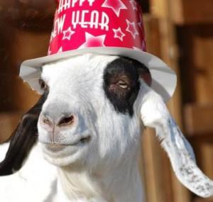 Прикольный козёл. Картинки с символом 2017 года