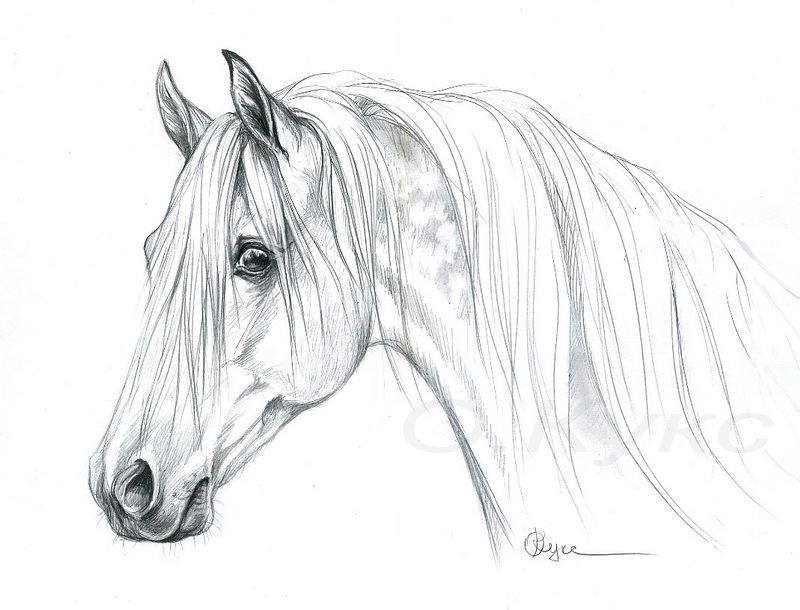 Картинки лошадей карандашом. Картинки с символом 2017 года