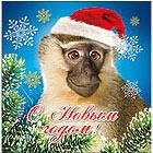 Новогодняя обезьяна аватар. Картинки с символом 2017 года
