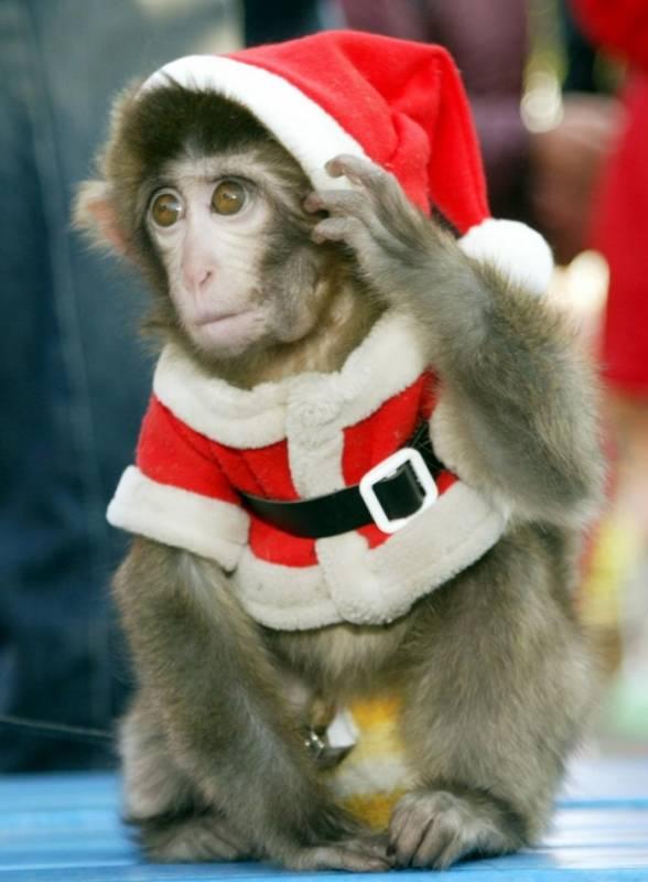 Фото с обезьянкой. Картинки с символом 2017 года