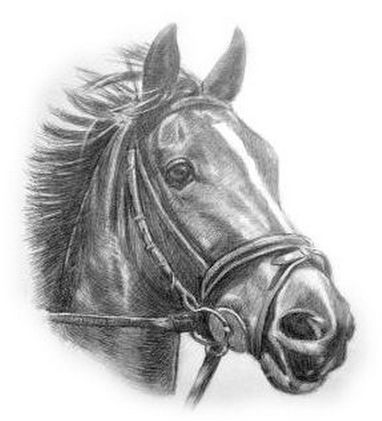 Рисунок лошади карандашом. Картинки с символом 2018 года
