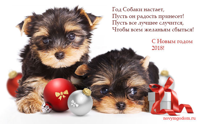 Картинка на Новый год собаки 2018. С Новым годом собаки 2018