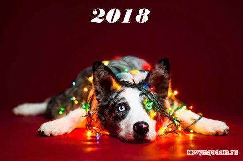 Открытка с новым годом собаки