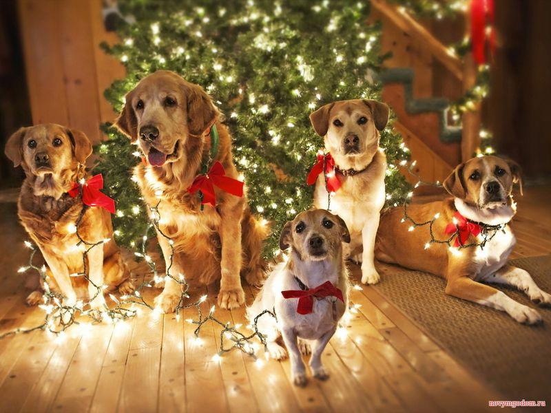 Год Петуха картинки. С Новым годом собаки 2018