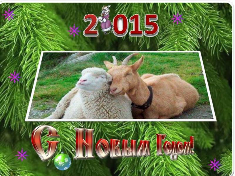 Коза и овца 2015. С Новым Годом козы овцы