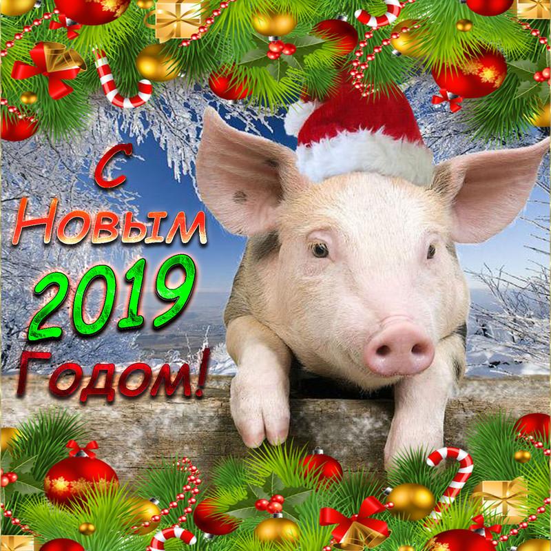 Открытка со свиньей