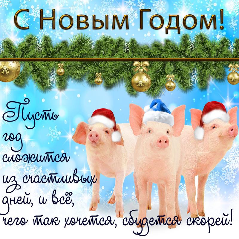 Прикольные поросята поздравляют с Новым годом